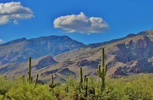Tucson desert